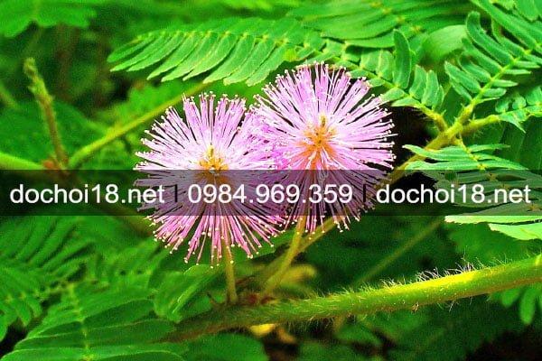 thuoc-ngu-thao-duoc-4