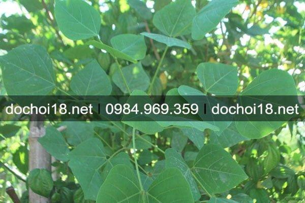 thuoc-ngu-thao-duoc-5